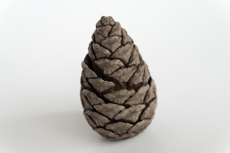 pinecone: Pinecone on the white background