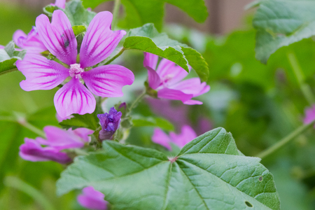 vernal: Purple flowers on a green meadow Stock Photo