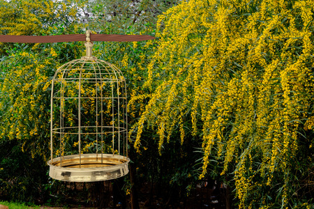 3D rendering of  a golden bird cage on garden, freedom concept Stock Photo