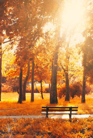 Leere Bank im Park, in goldenen und gelben Herbstfarben; Herbst Hintergrund