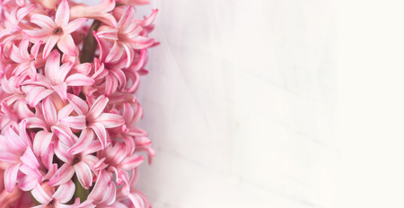 Pink Hyacinth flowers on white background, with copy space for your text; spring/floral background