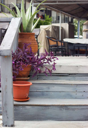 Detail of a aloe vera and purple heart plant in flowerpots on wooden stairs