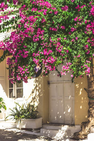 Streets of Neorio town in Poros island, Greece; Trees with pink flowers in narrow streets covering house entrances