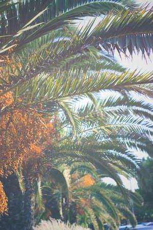 Palm trees leaves; nature background
