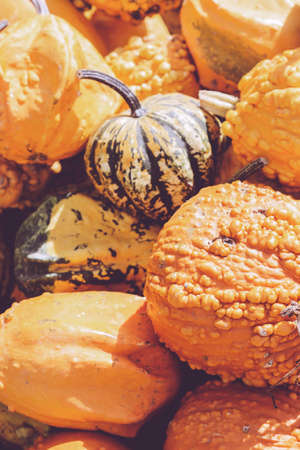 Close up of pumpkins on farmers market; autumn background