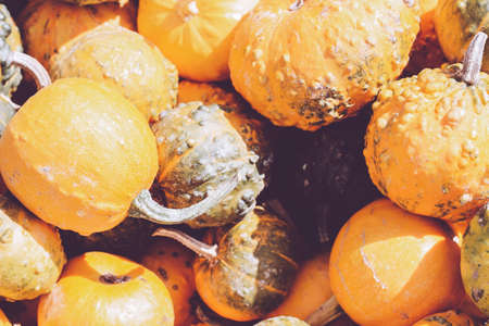 Pile of decorative mini pumpkins and gourds, on locale farmers market; autumn background