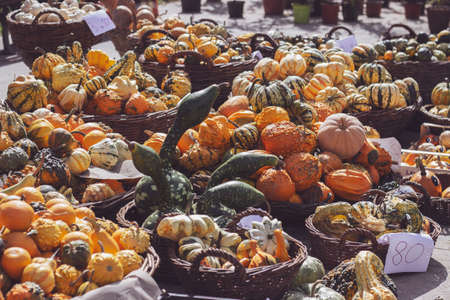 Decorative mini pumpkins and gourds in baskets on green market stand