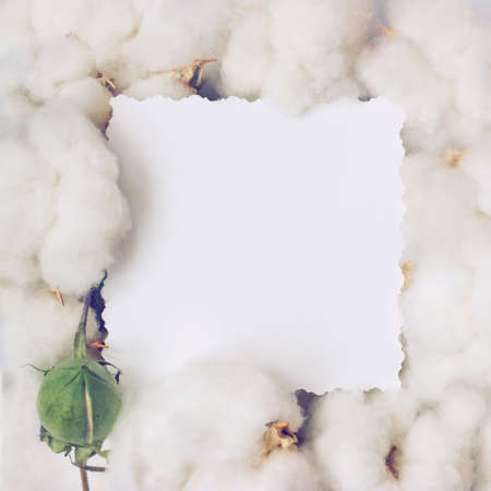 Creative layout made of cotton flowers and paper card note. Nature and organic. Flat lay with copy space Standard-Bild