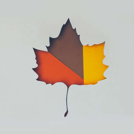 Creative autumn layout made of fallen leaves in shape of a leaf