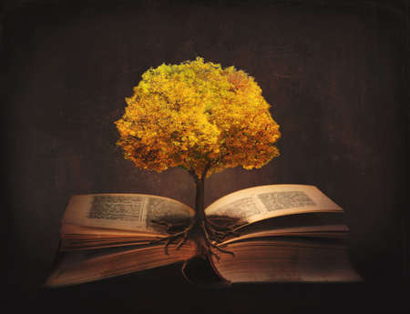 Book of life, knowledge, wisdom - old tree and its roots on open pages of a magic book; Standard-Bild