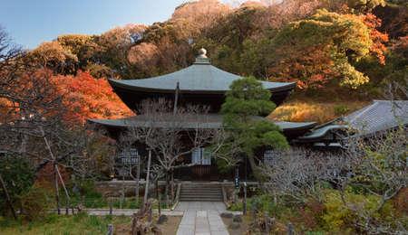 kamakura: Autumnal leaves   Zuisen-ji   Kamakura