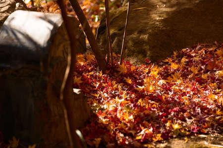 kamakura: Autumnal leaves   Kakuon-ji   Kamakura