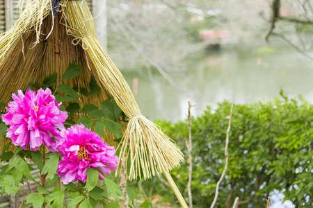 kamakura: Peony garden in Kamakura