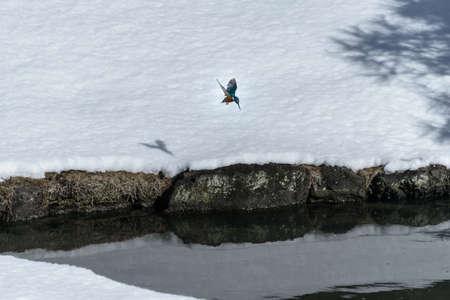 Kingfisher Stock Photo - 17360522