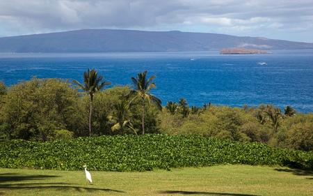 ハワイ、マウイ島のモロキニ島やラナイ島ワイレアからのビュー