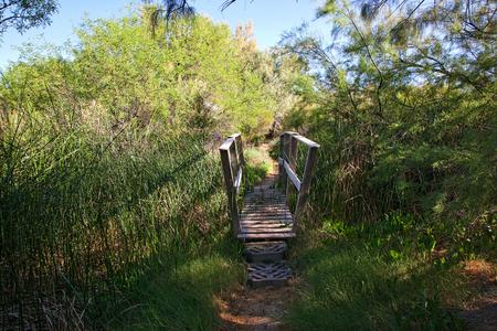 Narrow wooden foot bridge over creek in dense growth wilderness Stock Photo