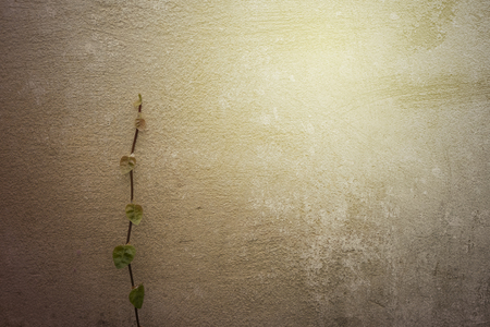 res: hi res grunge textures and background Stock Photo