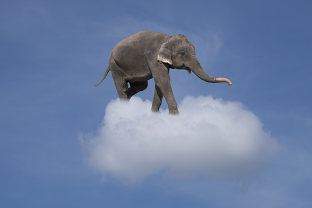 elephant in the clouds - lightness and fantasy concept Stock Photo