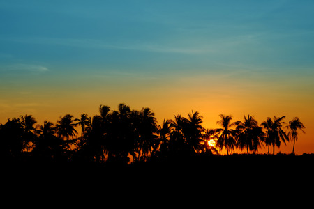 Sunset Coconut Tree Silhouettes, Tropical Sunset. Stock Photo
