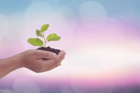 Human hand holding perfect growing tree plant on soil on blur natural background of greenery leaves: Reforestation, sustainable forest, saving environment and harmony ecosystems conservation campaign