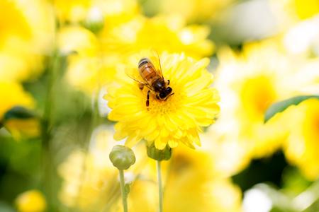avispa: abejas en el trabajo