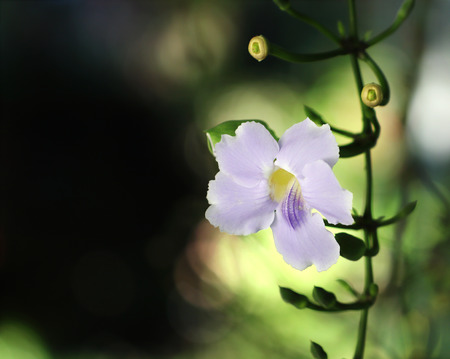 orchidea: Orchids