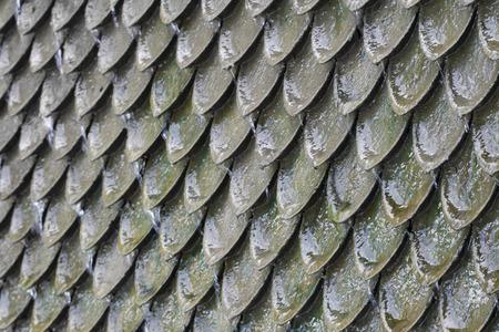 rutilus: Scales Background