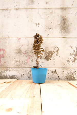 dry tree in the pot with white wall background