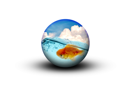 goldfish in globe ball
