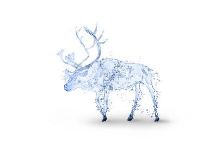 reindeer water splash