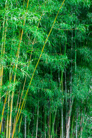 impression: Bamboo forest
