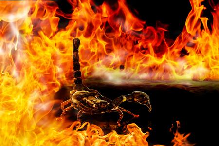 火の背景にサソリ