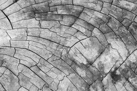 wood background texture. Foto de archivo - 122200985