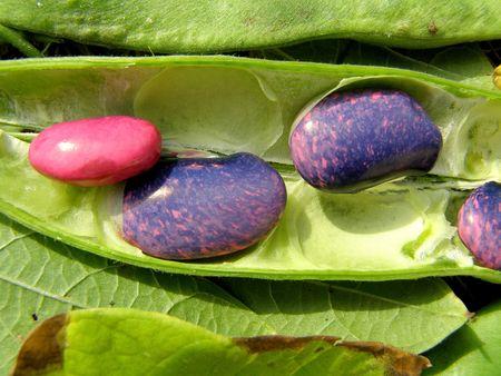 contrastive: fresh bean Stock Photo