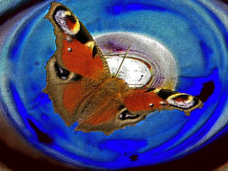 contrastive: butterfly in another world