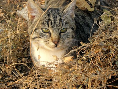 the thicket: cat in thicket Stock Photo