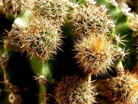 spiny: spiny cactus