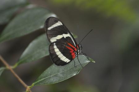 잎에 흰색 빨간색과 검은 색 나비