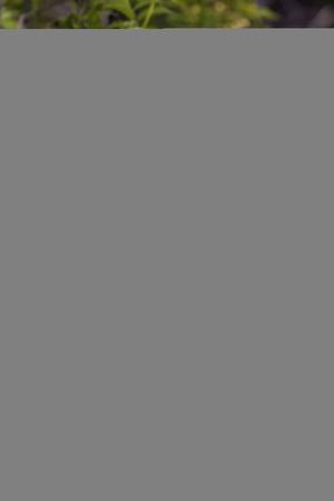 shorebird: Snowy Egret Chick Stock Photo