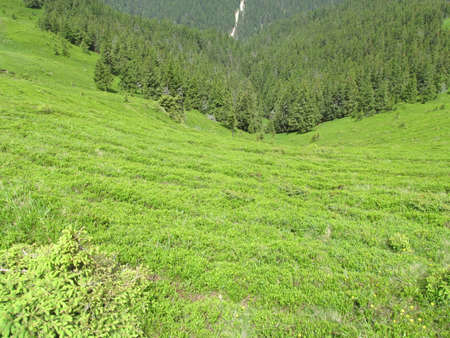 mountin: On my way to the Gropsoarele Peak in Ciucas Mountins, Romania.in a hot summer day