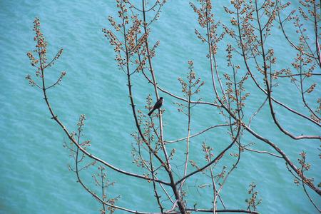 waterside: Waterside birds