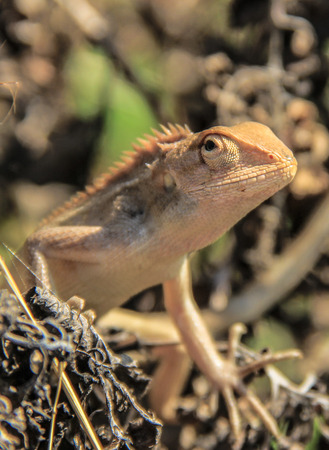 cold blooded: Lizard