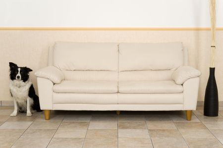 moulder: A dog  in the livingroom