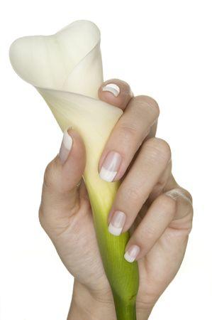 beautiful hand with fresh manicured nails holding a blossom (calla) Standard-Bild