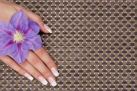 manicure Stock Photo - 9190848