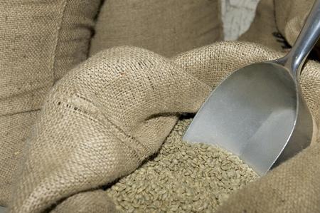 planta de cafe: caf� verde Foto de archivo