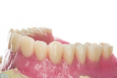denture: denture Stock Photo