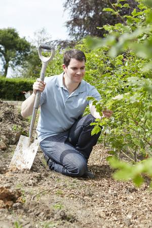 jardinero: Paisaje jardinero plantación Hedge