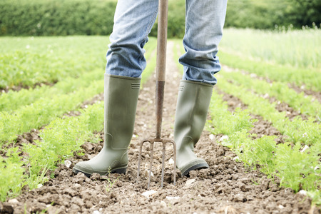 work boots: Close Up Of Farmer Working In Organic Farm Field