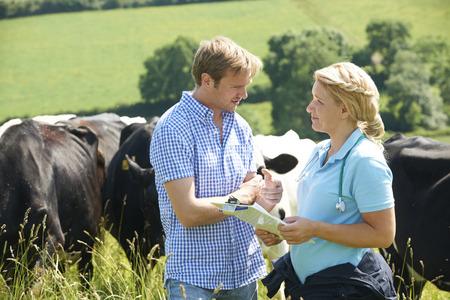 lacteos: Granjero de lechería que hablan con el veterinario en campo con el ganado en el fondo Foto de archivo